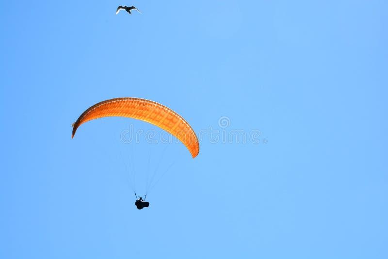 Hang Glider en Zeemeeuw royalty-vrije stock afbeelding