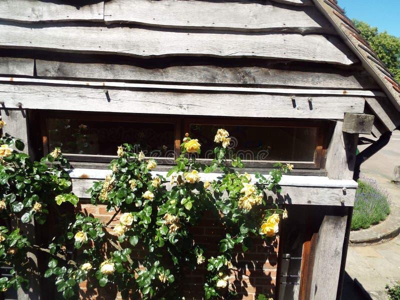 Hangar en bois avec des roses photos libres de droits