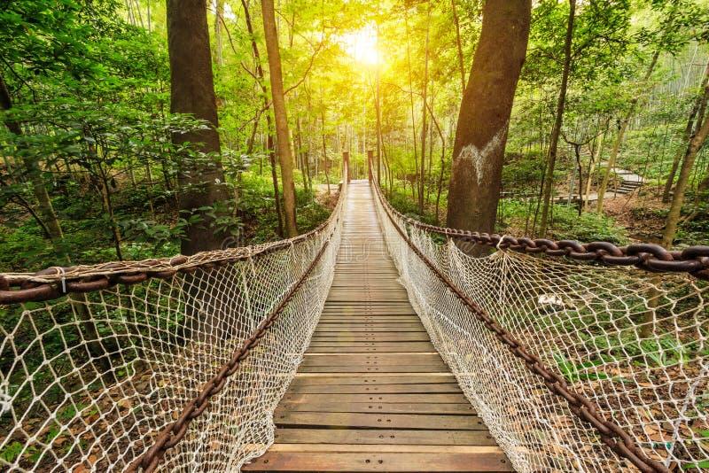 hangbrug in het bos stock foto afbeelding bestaande uit