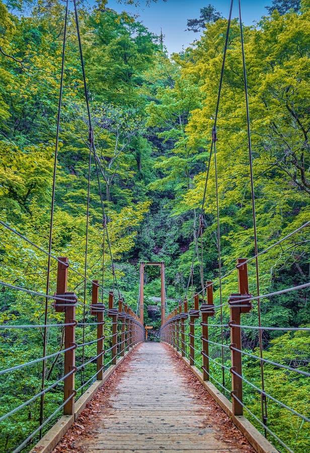 Hangbrug over de rivier in bos royalty-vrije stock afbeeldingen