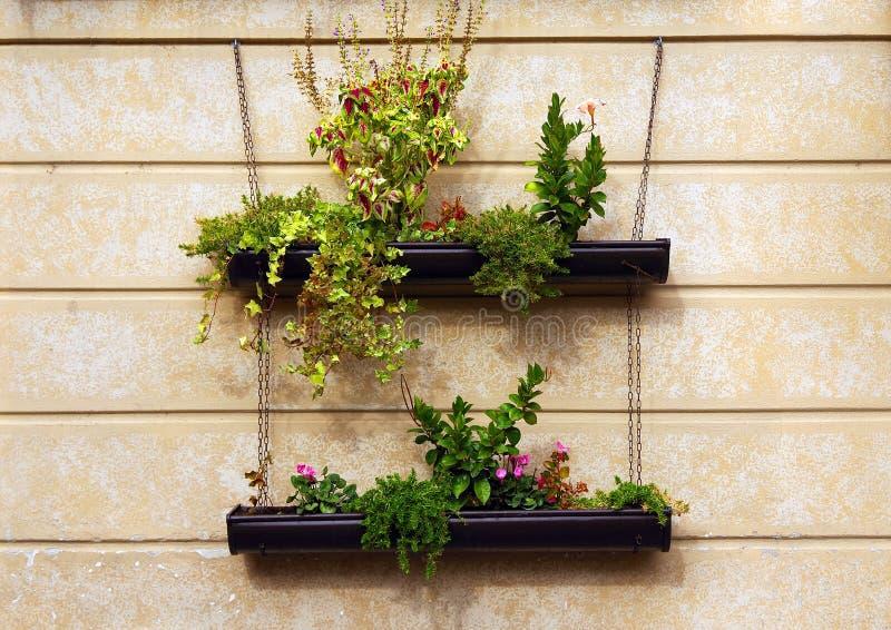 Hangende bloemen op de muur als decoratie in Iseo-stad - royalty-vrije stock foto's