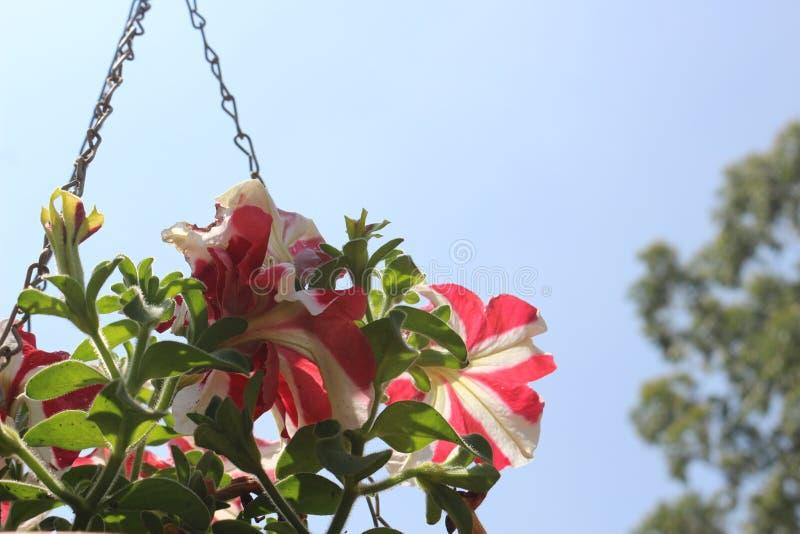Hangende bloempotten royalty-vrije stock afbeeldingen