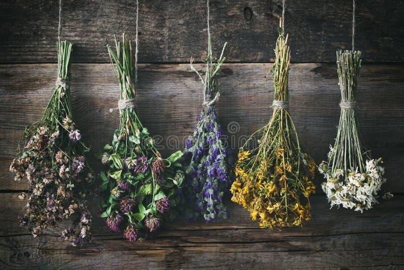 Hangende bossen van geneeskrachtige kruiden en bloemen royalty-vrije stock afbeeldingen