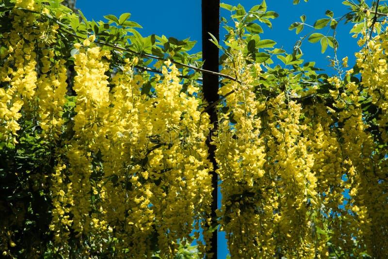 Hangende Gele Bloemen stock fotografie
