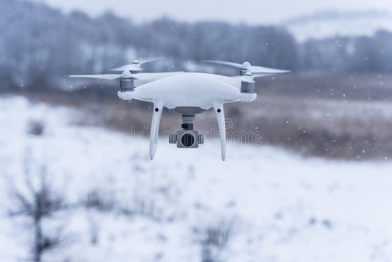 Hangende hommel die beelden van wilde aard nemen Koud de winterweer Bewolkte dag met dalende sneeuw stock foto