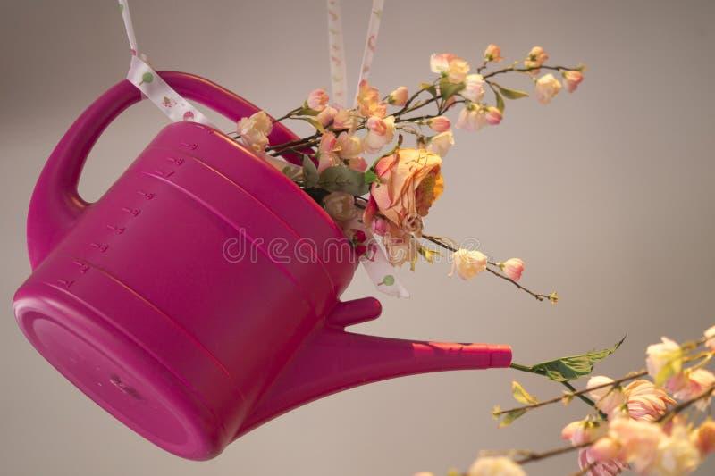 Hangende roze plastic die gieter, met rozen en anjerbloem, tegen roze witte achtergrond wordt gevuld royalty-vrije stock foto's