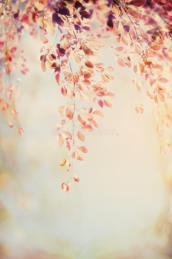 Hangende tak met de herfstgebladerte op vage aardachtergrond, patel retro kleur royalty-vrije stock afbeelding