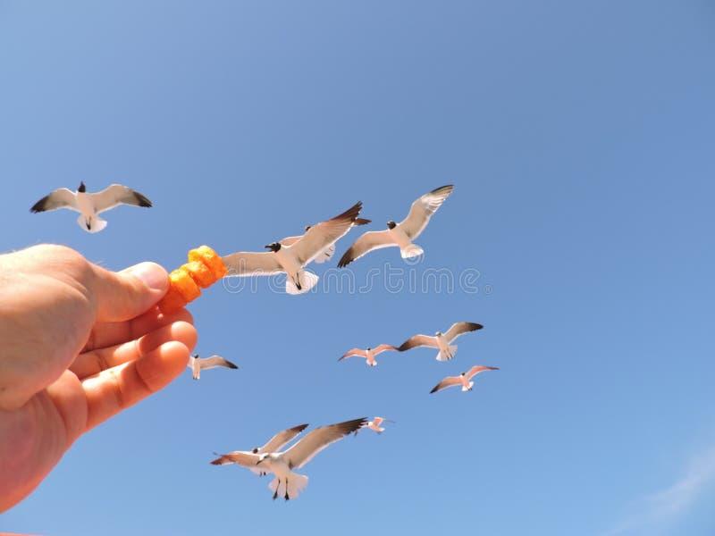 Hangende zeemeeuwen stock afbeelding