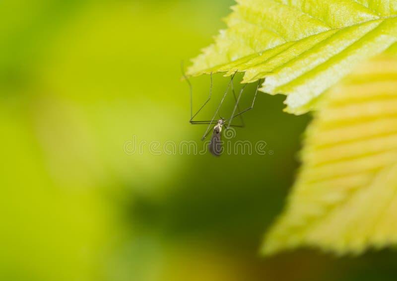 Download Hanging On stock photo. Image of nature, wildlife, shrub - 28030240