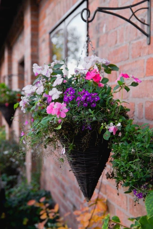Download Hanging basket stock photo. Image of garden, wall, decorative - 21726486