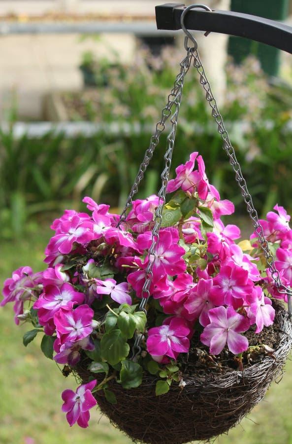 Hanging basket of flowers stock photos