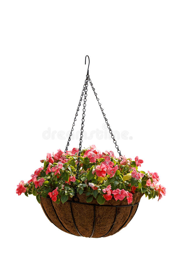 Free Hanging Basket Of Beautiful Flowers Isolated On White Background Royalty Free Stock Photos - 18272258