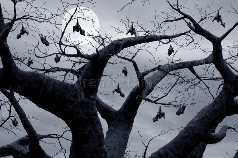 Hanging Bats. Halloween theme, bats hanging in a spooky tree royalty free stock images