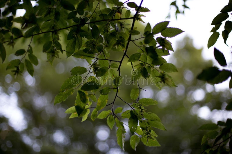 Hanging branches. Off a beaten path hanging underneath the big tree, these branches thrive full of life stock photo