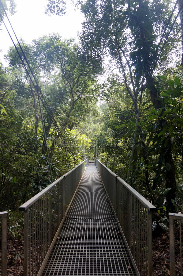 On the hanging bridge royalty free stock photography