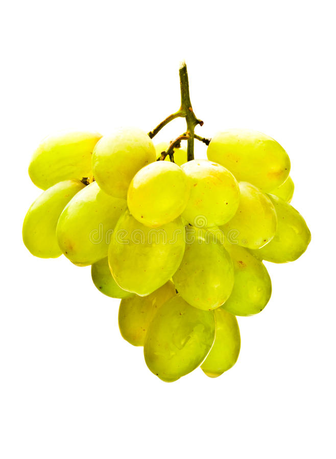 Download Hanging Bunch Of White Grape Stock Image - Image: 13904857