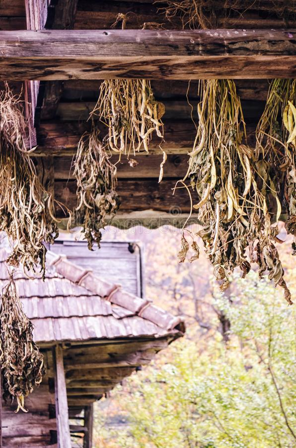 Hanging bunches of medicinal herbs. Dried herbs and flowers in the village royalty free stock images