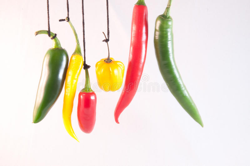 Hanging chillies royalty free stock photography