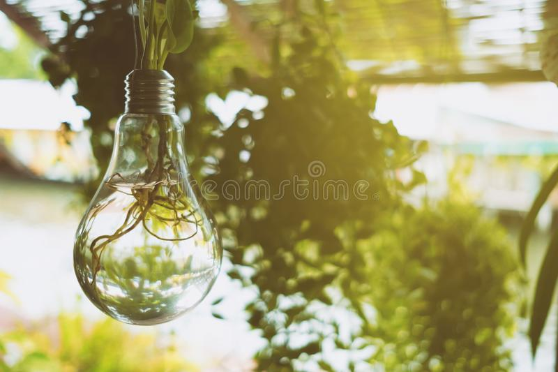 Hanging DIY Bulb Vase Hanging with Light leak. Selective Focus royalty free stock photo