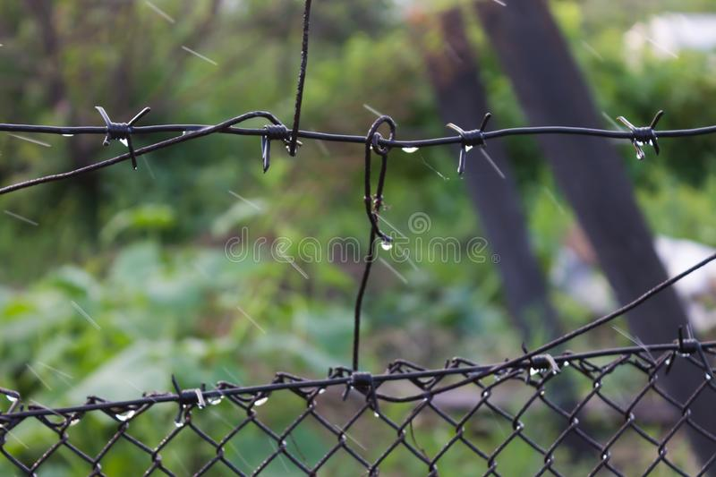 Raindrops on a barbed wire closeup. Hanging drops on a barbed wire during a rain royalty free stock images