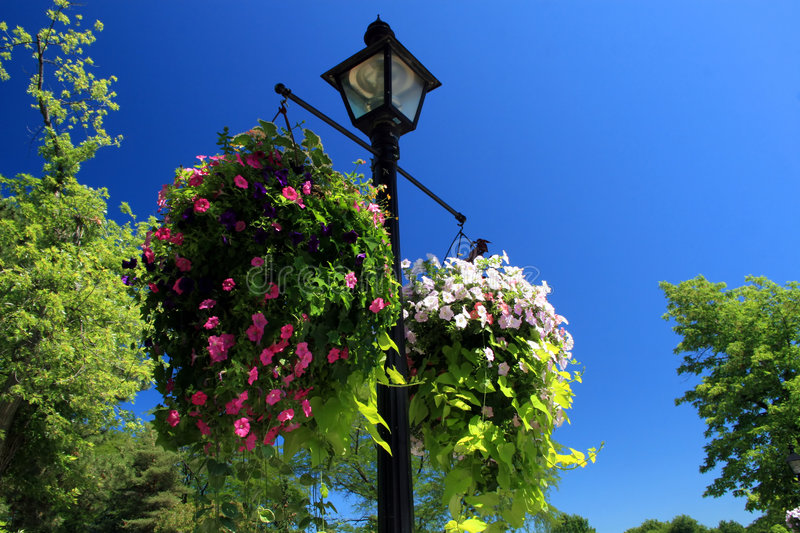 Hanging Flower Basket. Hanging from a lamppost in a tourist town, this attractive flowering basket adds beauty stock photography
