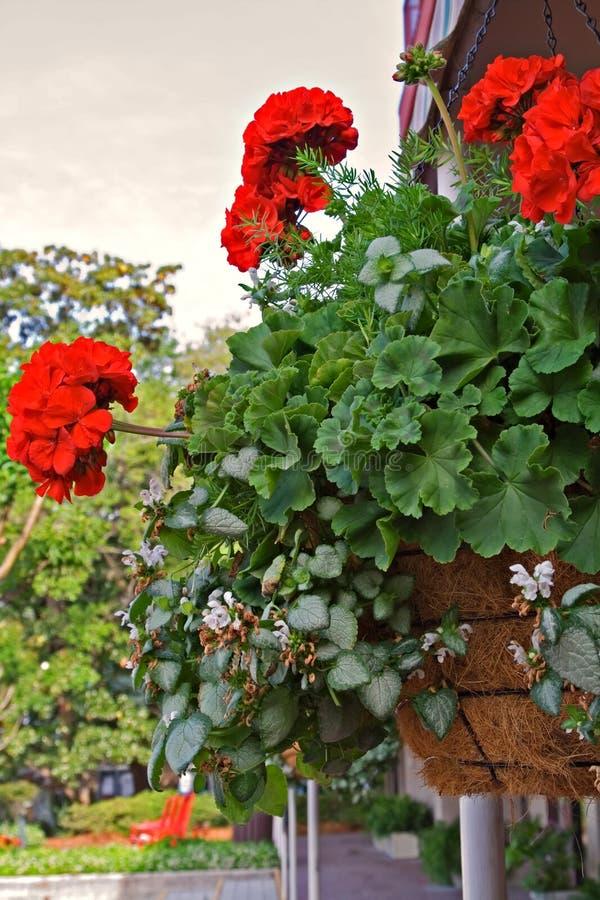 Free Hanging Flower Basket Royalty Free Stock Photos - 5101318