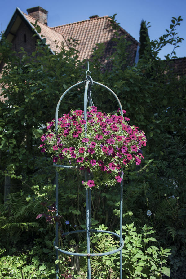 Hanging flower basket in front of a house royalty free stock photos
