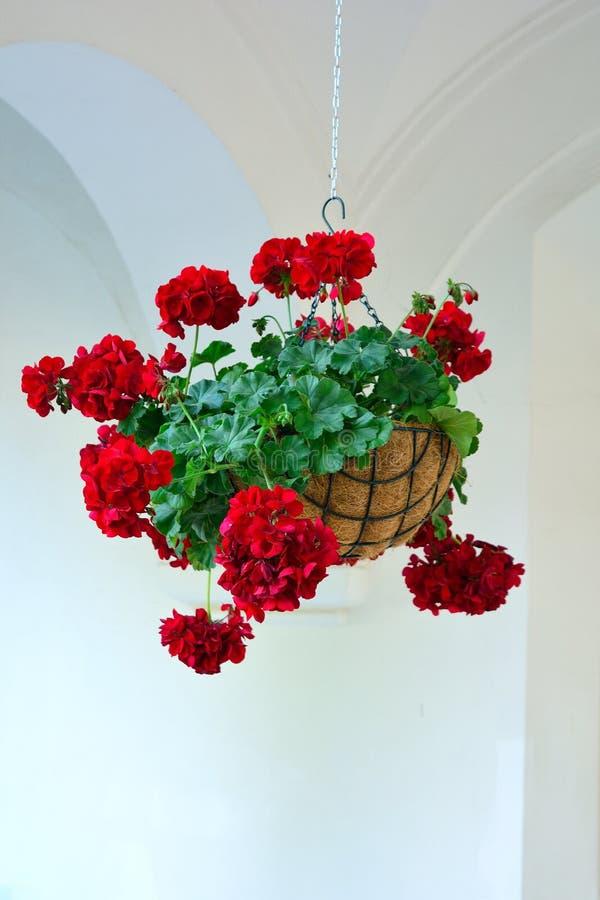 Hanging flower pot royalty free stock photo