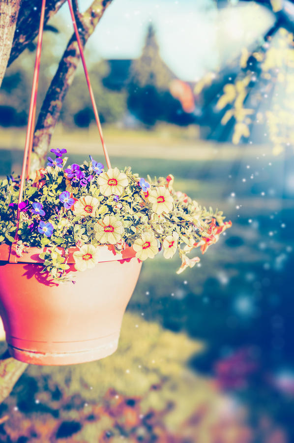 Hanging flowers pot with petunia on summer garden stock image