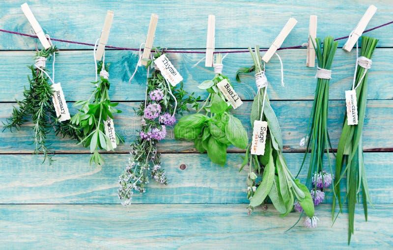 Download Hanging Herbs stock image. Image of farm, flowering, garden - 24917629