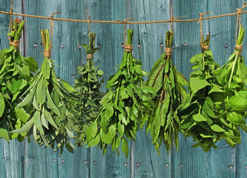 Hanging herbs royalty free stock photos