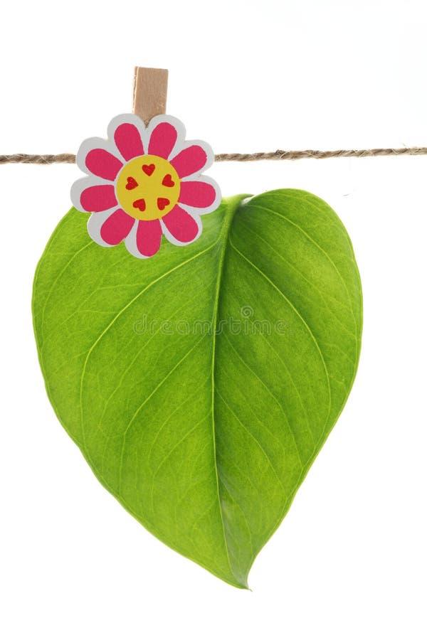 Download Hanging Leaf Stock Images - Image: 19050694