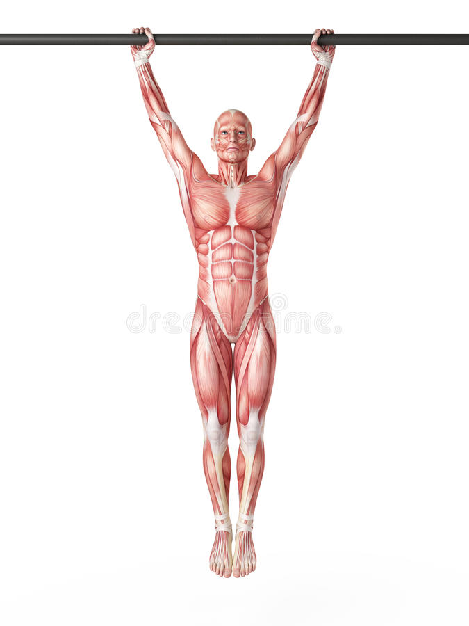 Hanging leg raises. Exercise illustration - hanging leg raises stock illustration