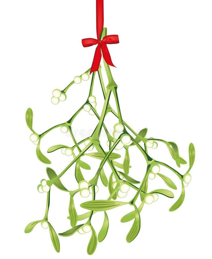 hanging mistletoe stock vector image of branch hanging. Black Bedroom Furniture Sets. Home Design Ideas