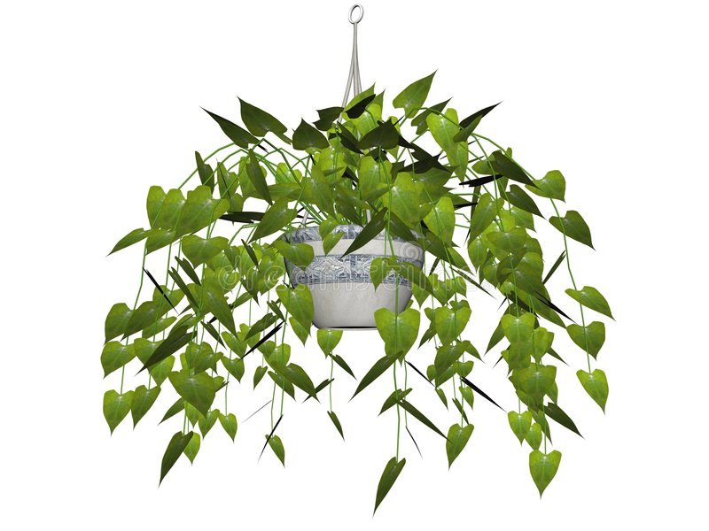 Download Hanging plant isolated stock illustration. Image of philodendron - 3828524
