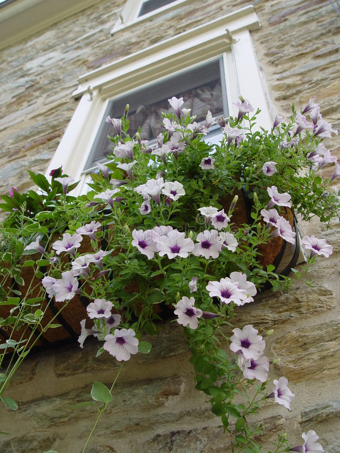 Download Hanging Planter stock image. Image of blooms, stone, green - 88365