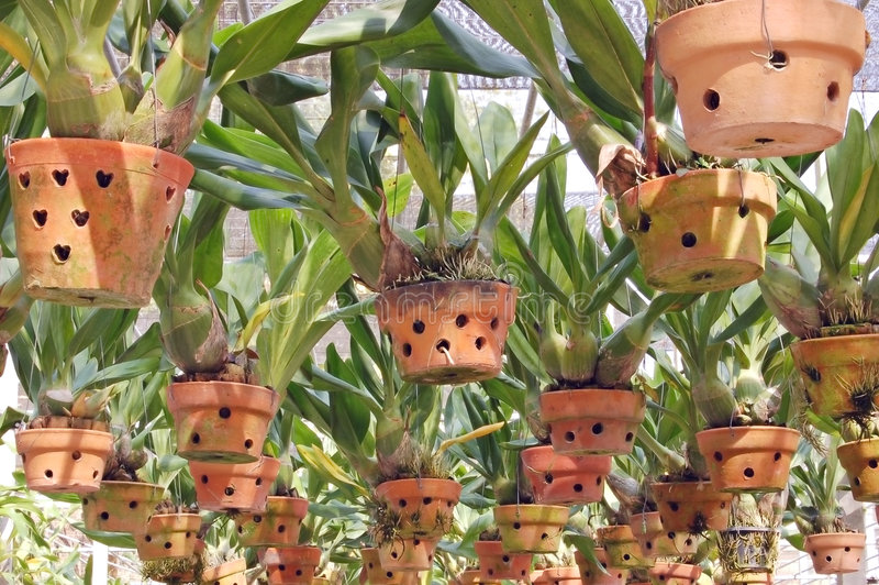 Download Hanging pots stock image. Image of hothouse, plantpot - 1722063