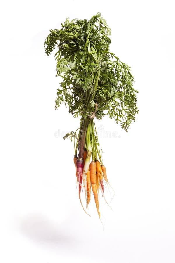 Hanging Rainbow Carrots royalty free stock image