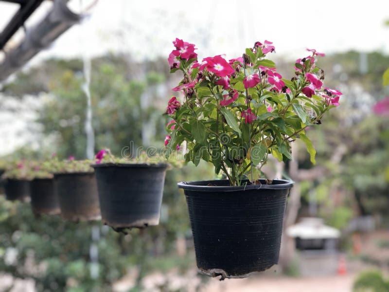 Red flower pot stock photos
