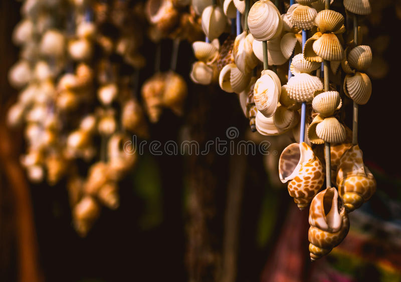 Hanging shells stock photography