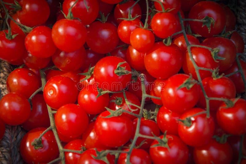Hanging tomato, cherry, macro photo of red cluster ripe tomato type stock photo