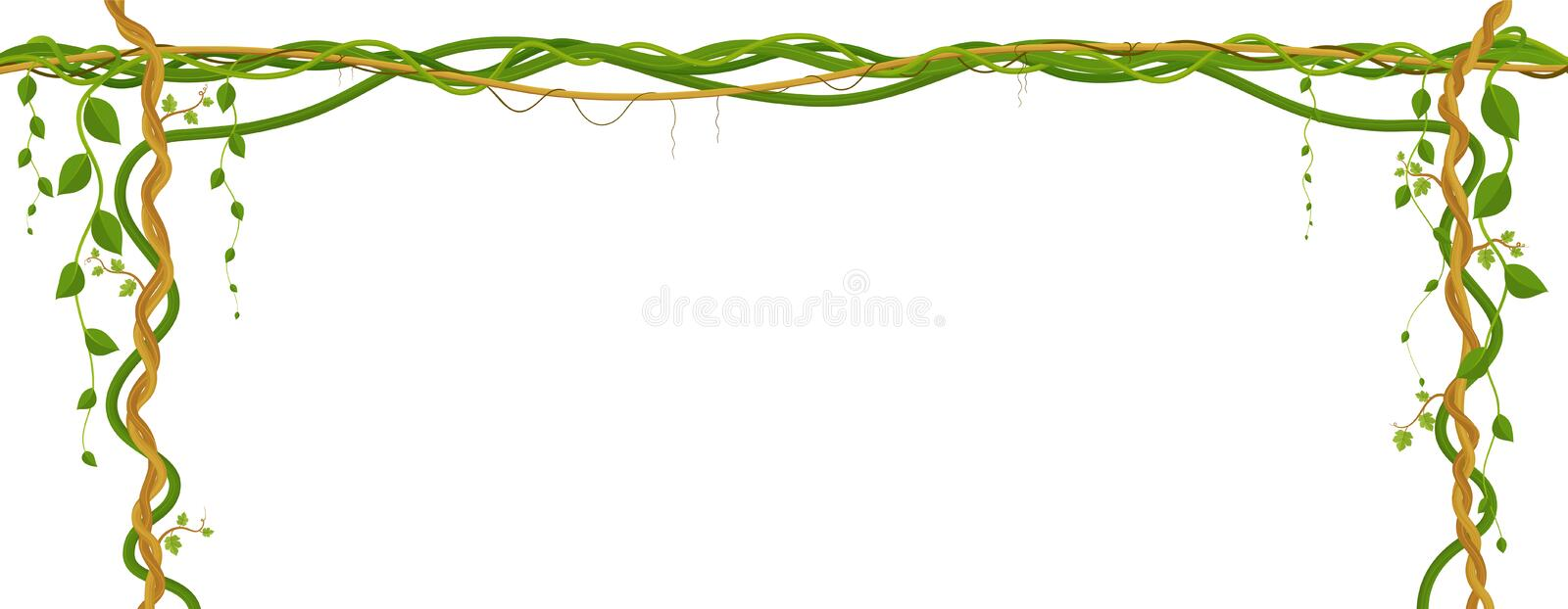 Hanging vine branches. Tropical jungle and plants on white background. royalty free illustration