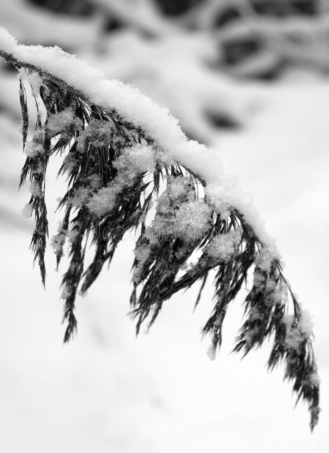 Download Hanging winter branch 1 stock image. Image of cold, frozen - 16709717