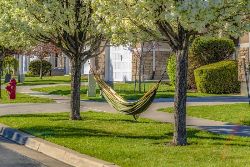 Hangmat aan de takken van bomen met witte bloemen in de lente wordt gebonden die stock foto's