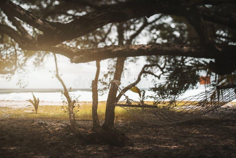 Hangmat in de schaduw van de bomen royalty-vrije stock foto
