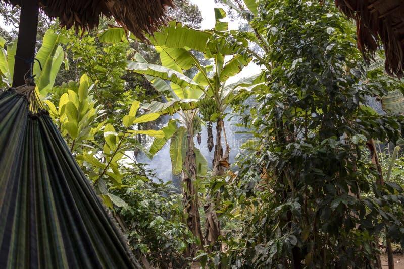 Hangmat in de wildernissen met niemand, regenwoud van het Stroomgebied van Amazonië in Zuid-Amerika stock afbeeldingen