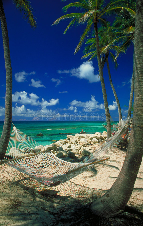 Hangmat in Paradijs stock foto's