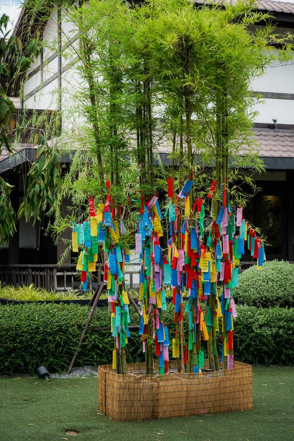 Hangs coloured paper strips Tanzaku on bamboo branches, for good auspicious, during traditional Tanabata Japanese Festival royalty free stock photography