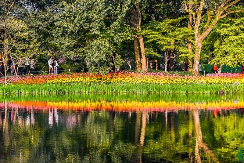 HANGZHOU, ΚΙΝΑΣ - 26 Μαρτίου, 2018: Τοπίο άνοιξη, ζωηρόχρωμες φρέσκες άνθιση τουλιπών και αντανακλάσεις στον ποταμό σε διάσημο στοκ φωτογραφίες