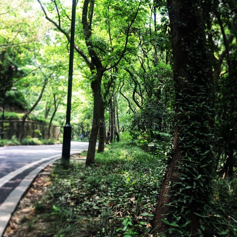 hangzhou στοκ φωτογραφίες με δικαίωμα ελεύθερης χρήσης
